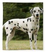 Dalmatian Dog Fleece Blanket