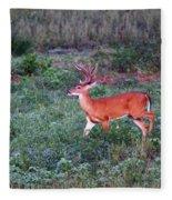 Deer-img-0113-001 Fleece Blanket