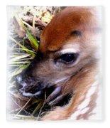 Deer-img-0349-002 Fleece Blanket