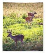 Deer-img-0437-001 Fleece Blanket