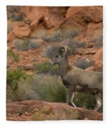 Desert Bighorn Sheep Fleece Blanket