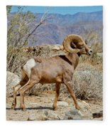 Desert Bighorn Sheep Ram At Borrego Fleece Blanket