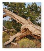 Desert Creation Fleece Blanket