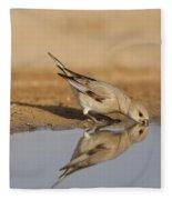 Desert Finch Carduelis Obsoleta Fleece Blanket