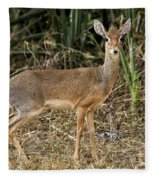 Dik-dik Fleece Blanket