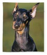 Doberman Pinscher Dog Fleece Blanket