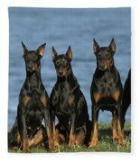 Doberman Pinschers Fleece Blanket