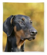 Dobermann Dog, In Autumn Fleece Blanket