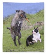 Dogs Playing With Stick Fleece Blanket