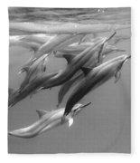 Dolphin Pod Fleece Blanket
