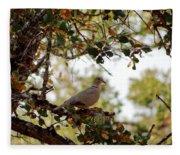 Dove In Autumn Oak Tree Lower Lake Ca Fleece Blanket
