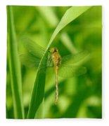 Dragonfly On A Grass Stem Fleece Blanket