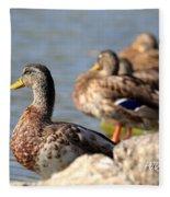 Ducks Fleece Blanket