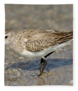 Dunlin Calidris Alpina In Winter Plumage Fleece Blanket
