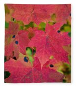 Early Fall Of Norway Maple Fleece Blanket