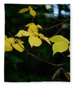 Early Fall Of Wych Elm Fleece Blanket