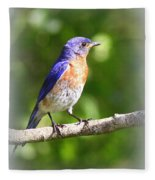 Eastern Bluebird - After His Bath Fleece Blanket