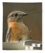 Eastern Bluebird Eye To Eye Fleece Blanket