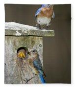 Eastern Bluebird Family Fleece Blanket