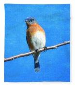Eastern Bluebird II Fleece Blanket