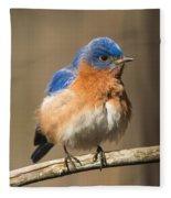 Eastern Bluebird Male Ruffled Fleece Blanket