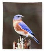 Eastern Bluebird - The Old Fence Post Fleece Blanket