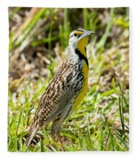 Eastern Meadowlark Fleece Blanket