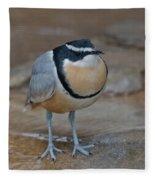Egyptian Plover Fleece Blanket