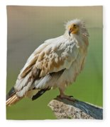 Egyptian Vulture Fleece Blanket