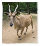 Eland Antelope Out In The Open Fleece Blanket