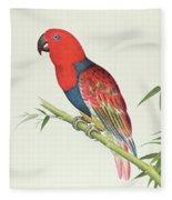 Electus Parrot On A Bamboo Shoot Fleece Blanket