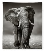 Elephant Approach From The Front Fleece Blanket