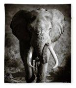 Elephant Bull Fleece Blanket
