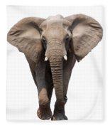 Elephant Isolated Fleece Blanket