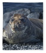 Elephant Seal Pup... Fleece Blanket