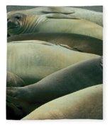 Elephant Seal Pups Fleece Blanket