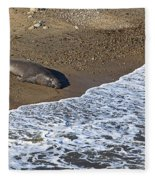 Elephant Seal Sunning On Beach Fleece Blanket