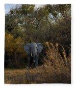 Elephant Trail Fleece Blanket