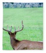 Elk Resting On A Meadow In Great Smoky Mountains Fleece Blanket by Alex Grichenko