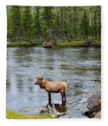 Elk Stag In The Madison River Of Yellowstone National Park Fleece Blanket