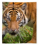 Endangered Species Sumatran Tiger Fleece Blanket