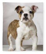 English Bulldog Fleece Blanket