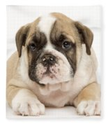 English Bulldog Puppy Fleece Blanket