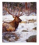 Estes Park Elk Fleece Blanket
