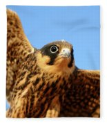 Eurasian Hobby Falco Subbuteo In Fleece Blanket