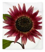 Evening Sun Sunflower 2 Fleece Blanket