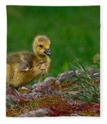 Exploring Fleece Blanket