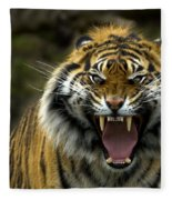 Eyes Of The Tiger Fleece Blanket