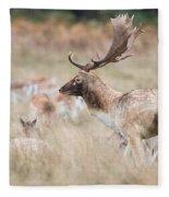 Fallow Deer Buck Fleece Blanket