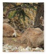 Family Nap Fleece Blanket